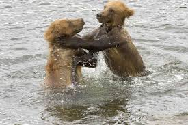 All animals play. Only humans deprive their kids of this.