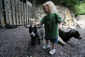Stay away from my kid! (Says the goat.)
