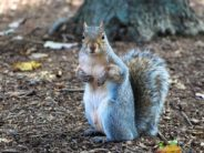squirrel angry