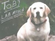 "Toby, the ""dog"" that was ""missing."""