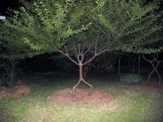 Okay, I'll admit it. I AM a spooky tree.