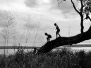 kids in tree creative commons