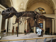 field museum dinosaur by Jtesla16 at wts wikivoyage