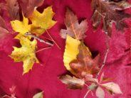 lenore autumn leaves 2020