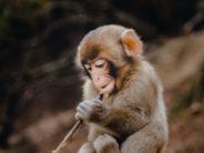 unsplash baby monkey benjamin-wong-_T633k1Ly7A-unsplash