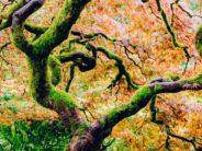 tree unsplash eric-muhr-Cg5qdn7S1c8-unsplash